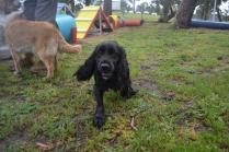 banksia-park-puppies-jodel-28-of-31