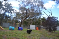 banksia-park-puppies-jodel-7-of-31