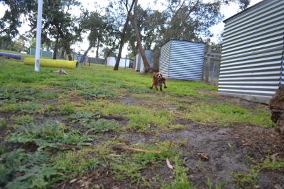 banksia-park-puppies-pia-1-of-34