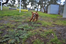 banksia-park-puppies-pia-2-of-34