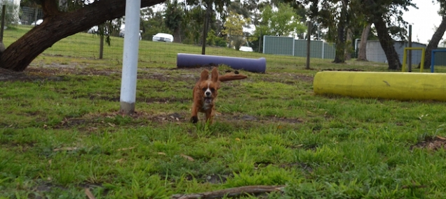 banksia-park-puppies-pia-26-of-34