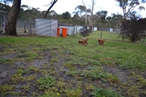 banksia-park-puppies-pia-29-of-34