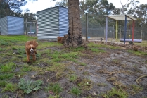 banksia-park-puppies-pia-31-of-34