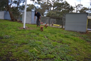banksia-park-puppies-pia-33-of-34