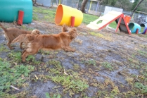 banksia-park-puppies-pippi-10-of-17