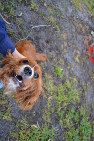 banksia-park-puppies-pippi-13-of-17