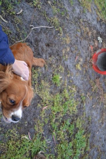 banksia-park-puppies-pippi-14-of-17