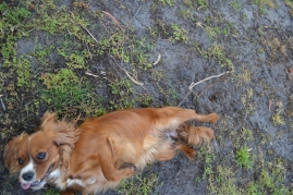 banksia-park-puppies-pippi-17-of-17