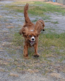 banksia-park-puppies-pippi-2-of-17