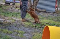 banksia-park-puppies-pippi-5-of-17
