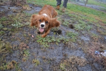 banksia-park-puppies-pippi-9-of-17