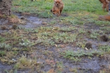 banksia-park-puppies-rosy-6-of-7