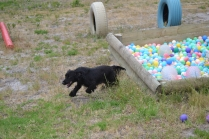 banksia-park-puppies-julia-josepha-12-of-39
