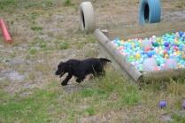 banksia-park-puppies-julia-josepha-12-of-39
