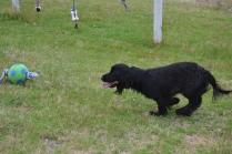 banksia-park-puppies-julia-josepha-15-of-39