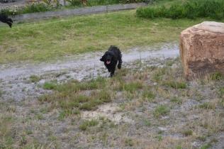banksia-park-puppies-julia-josepha-20-of-39