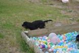 banksia-park-puppies-julia-josepha-9-of-39
