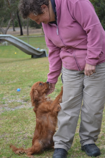 banksia-park-puppies-ruby-10-of-20