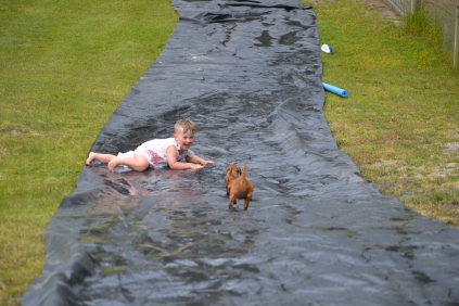 banksia-park-puppies-slip-and-slide-10