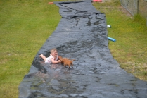 banksia-park-puppies-slip-and-slide-11