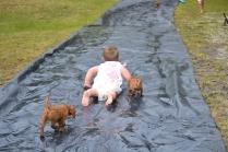 banksia-park-puppies-slip-and-slide-9