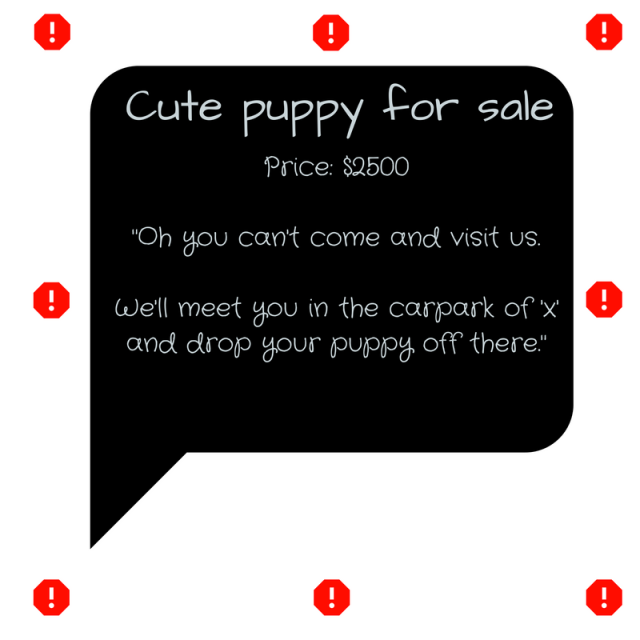 cute-puppy-for-sale-1