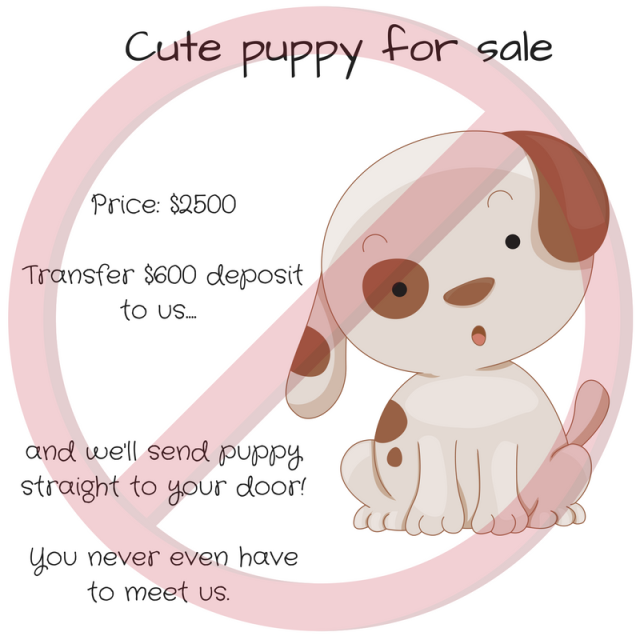 cute-puppy-for-sale