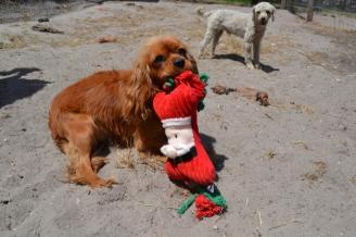banksia-park-puppies-sand