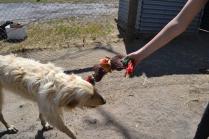banksia-park-puppies-sand4