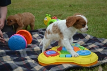 Baby toys are so useful as it helps to teach the puppies cause and effect