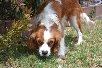 patch-banksia-park-puppies-1-of-17