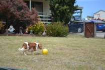 patch-banksia-park-puppies-12-of-17