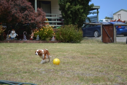 patch-banksia-park-puppies-13-of-17