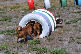 Banksia Park Puppies Playgrounds - 1 of 25 (11)