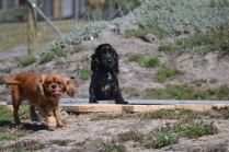 Banksia Park Puppies Playgrounds - 1 of 25 (13)