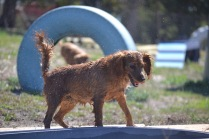 Banksia Park Puppies Playgrounds - 1 of 25 (14)