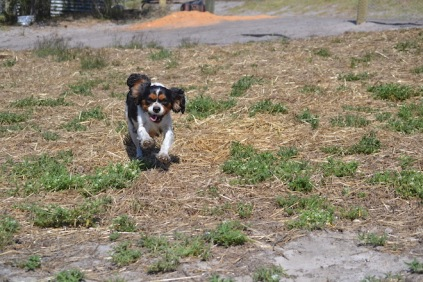 Banksia Park Puppies Playgrounds - 1 of 25 (22)