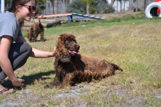 Banksia Park Puppies Playgrounds - 1 of 25 (24)