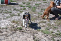 Banksia Park Puppies Playgrounds - 1 of 25 (4)