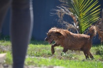 Banksia Park Puppies Playgrounds - 1 of 25 (7)
