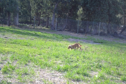 ADULT AGILITY PARK- Banksia Park Puppies - 101 of 117
