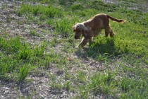 ADULT AGILITY PARK- Banksia Park Puppies - 103 of 117