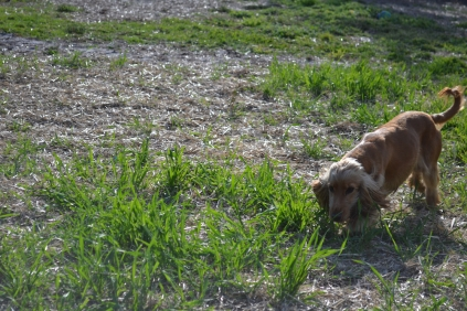 ADULT AGILITY PARK- Banksia Park Puppies - 104 of 117