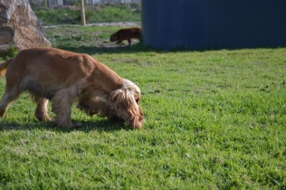 ADULT AGILITY PARK- Banksia Park Puppies - 108 of 117
