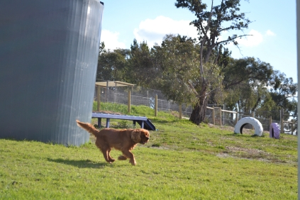 ADULT AGILITY PARK- Banksia Park Puppies - 109 of 117