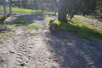 ADULT AGILITY PARK- Banksia Park Puppies - 114 of 117