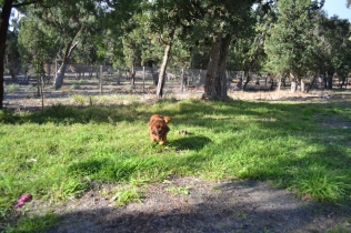 ADULT AGILITY PARK- Banksia Park Puppies - 116 of 117