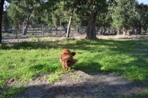 ADULT AGILITY PARK- Banksia Park Puppies - 117 of 117