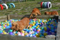 ADULT AGILITY PARK- Banksia Park Puppies - 13 of 117