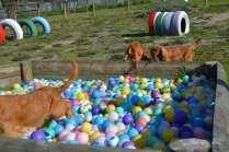 ADULT AGILITY PARK- Banksia Park Puppies - 14 of 117